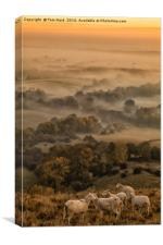 Sheep in the Mist, Canvas Print