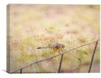 Dreamy Dragonfly, Canvas Print