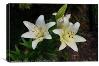 Easter Lilies, Canvas Print