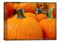 Hiding in the Pumpkin Patch, Canvas Print