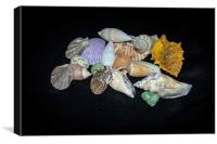 Sea Shells, Canvas Print