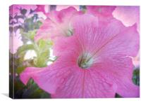 Pretty Petunia, Canvas Print