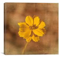 Marigold, Canvas Print