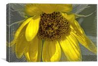 Radiant Sunflower, Canvas Print