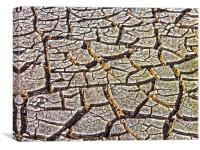 Drought, Canvas Print