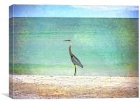Big Blue Heron, Canvas Print