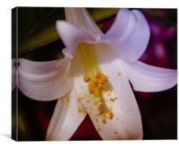 Vibrant Lily, Canvas Print