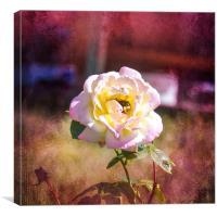 Snug in a Rose, Canvas Print