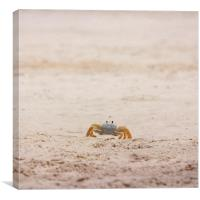 Ninja Crab, Canvas Print