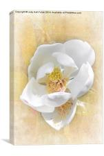 Sweet Southern Magnolia, Canvas Print