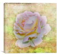 Shimmering Rose Petals, Canvas Print