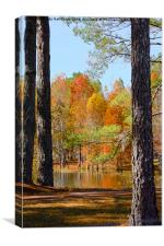 Florida Autumn, Canvas Print