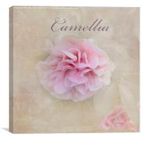 Camellia, Canvas Print