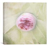Pink Bud, Canvas Print