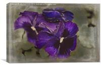 Petunias, Canvas Print