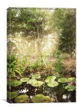 Lily Pond, Canvas Print