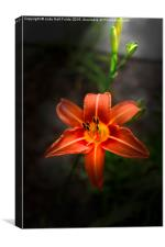 Lily Spotlight, Canvas Print