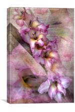 Pink Glads, Canvas Print