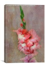 Coral and White Gladiolas, Canvas Print