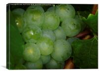 Grapes, Canvas Print