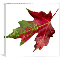 Fall Leaf, Canvas Print