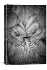 Eye of the Iris, Canvas Print
