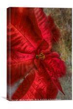 Christmas Flower, Canvas Print