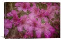 Springtime Beauty, Canvas Print