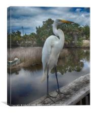 Charlie the Great Egret, Canvas Print