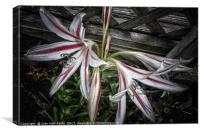 Striped Lilies, Canvas Print