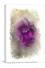 Purple Gladiolas, Canvas Print