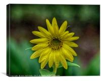 Brilliant Yellow Flower, Canvas Print