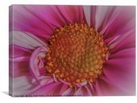 Pastel Petals, Canvas Print