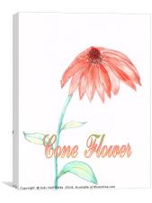 Cone Flower, Canvas Print