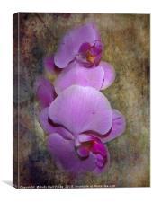 Purple Orchids, Canvas Print