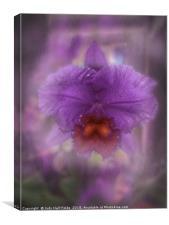 Ruffled Petals, Canvas Print