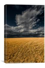 Cloud over corn stubble., Canvas Print