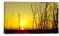 Parkgate Grass at Sunset, Canvas Print