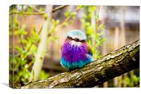 Lilac-Breasted Roller, Canvas Print