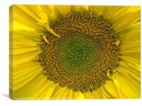 The golden Nectar, Canvas Print