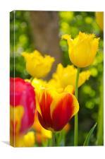 Tulips in Springtime, Canvas Print