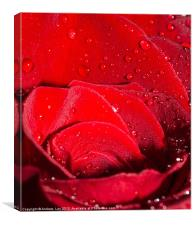 Roses and Water, Canvas Print