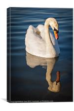 Reflective Thoughts, Canvas Print