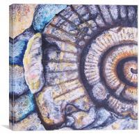 Ammonite Life Study, Canvas Print