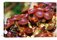 Sea Anemones, Canvas Print