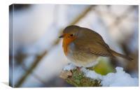 Wintery Robin, Canvas Print