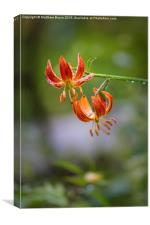 Spring Floral 1 - Lily, Canvas Print