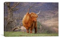 Highland Cattle, Canvas Print