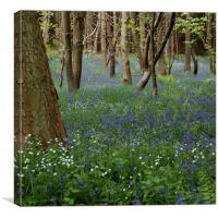 BlueBells,Derbyshire, Canvas Print