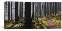 Whinlatter Forest, Canvas Print